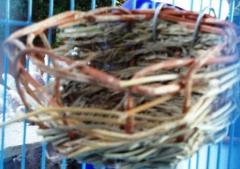 Hopes nest